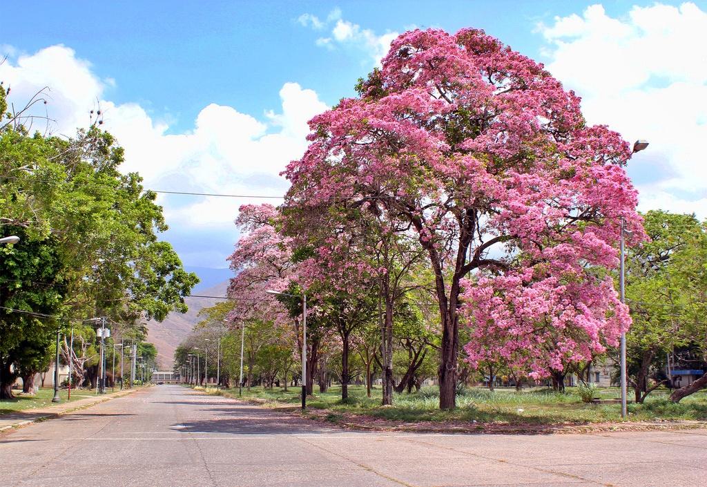 Flores, Venezuela