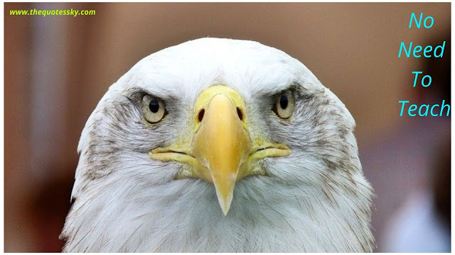 Bald Eagle Quotes and Instagram Captions for Instagram 2021