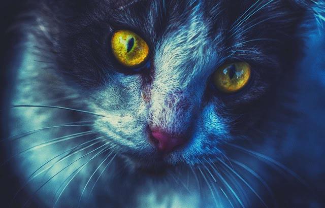 Tại sao mèo có thể xâm nhập vào thế giới linh hồn?