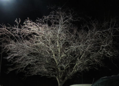 stark winter tree in lights