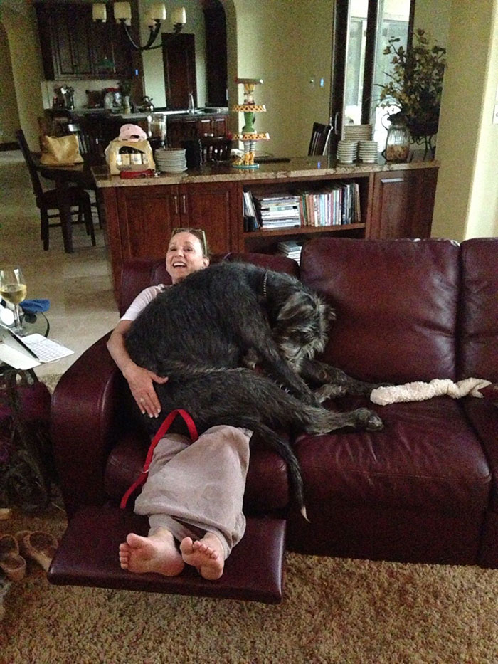Hilarious Pictures Of 24 Adorable Though Giant Wolfhounds