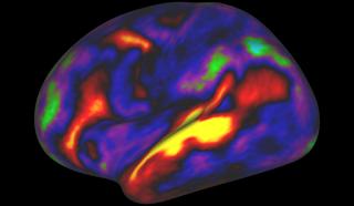 Brain Map, brain research, brain, develop brain, memory