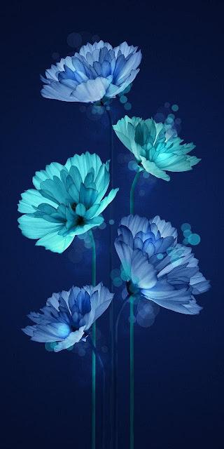 wallpaper Android 720x1280, fiori
