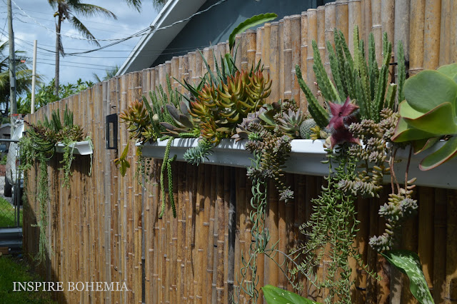 Custom Cactus and Succulent Rain Gutter Fence Planters by Inspire Bohemia - Miami/Ft. Lauderdale