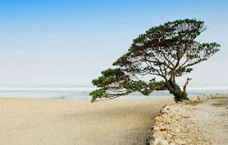 destinasi wisata Pantai Pok Tunggal yogyakarta