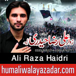 http://www.humaliwalayazadar.com/2013/12/ali-raza-haidri-audio-nohay-2007-to-2014.html
