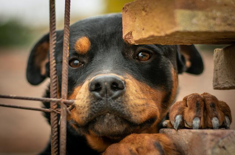 Essential items for the care of a Rottweiler