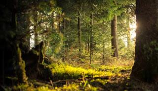 tohumlar fidana, doğa sevgisi, güncel