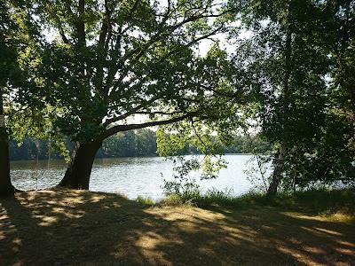 Blick durch die Uferbäume auf den See