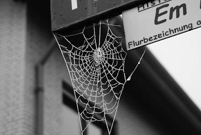 Ein gefrorenes Spinnennetz hängt an einem Straßenschild