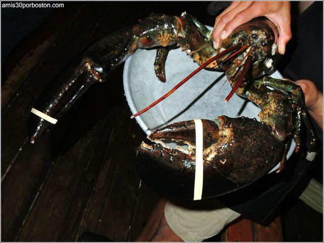 Langosta Gigante del The Barking Crab en Boston