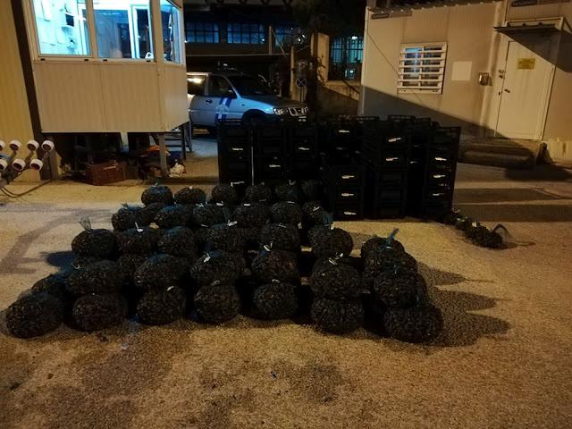 Ήγουμενίτσα: Κατάσχεση 1 Τόνου Και 242 Κιλών Αλιευμάτων Στην Ηγουμενίτσα!