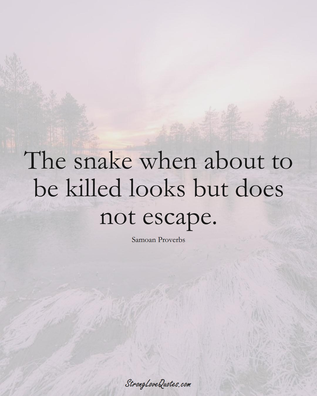 The snake when about to be killed looks but does not escape. (Samoan Sayings);  #AustralianSayings