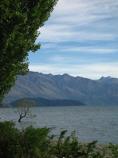 lonely tree, Lake Wanaka
