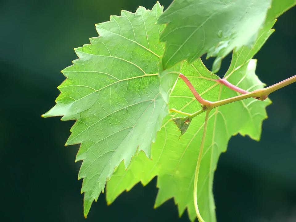 soal essay tentang fotosintesis beserta jawaban