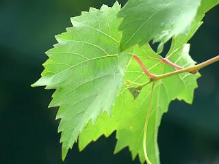 Soal dan Jawaban Bab Fotosintesis Tumbuhan (Pilgan, Essay)
