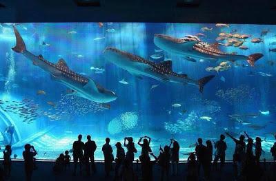 El Okinawa Churaumi es el segundo acuario más grande del mundo