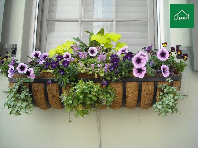 صور احواض زراعة الزهور و الورود في البيت