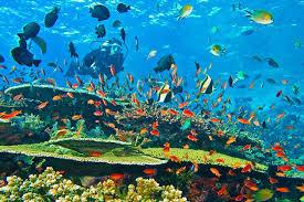 Potensi Sumber Daya Alam Indonesia Dan Pemanfaatannya Wisata Indonesia