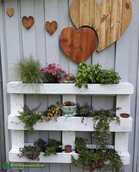 Vertical Garden of wooden shelves
