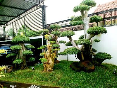 Tukang Taman Surabaya Tukang Taman Profesional Surabaya