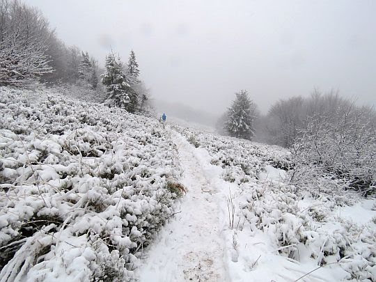 Ostatnia polana przed szczytem.
