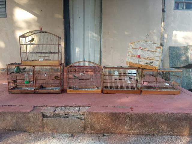 Polícia Ambiental resgata aves mantidas irregularmente em cativeiro a aplica R$ 4 mil em multas