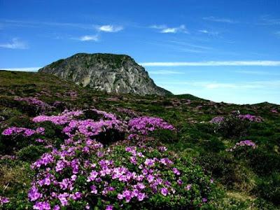 Du lịch Hàn Quốc thăm công viên Quốc gia Hallasan