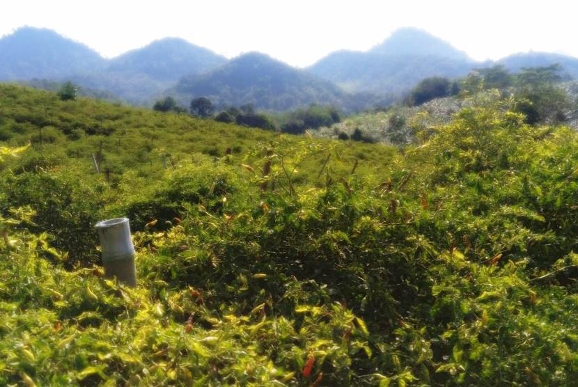 Kalimantan Barat: Harta Karun Perkebunan Indonesia dan Jasa Konsultan Terbaik