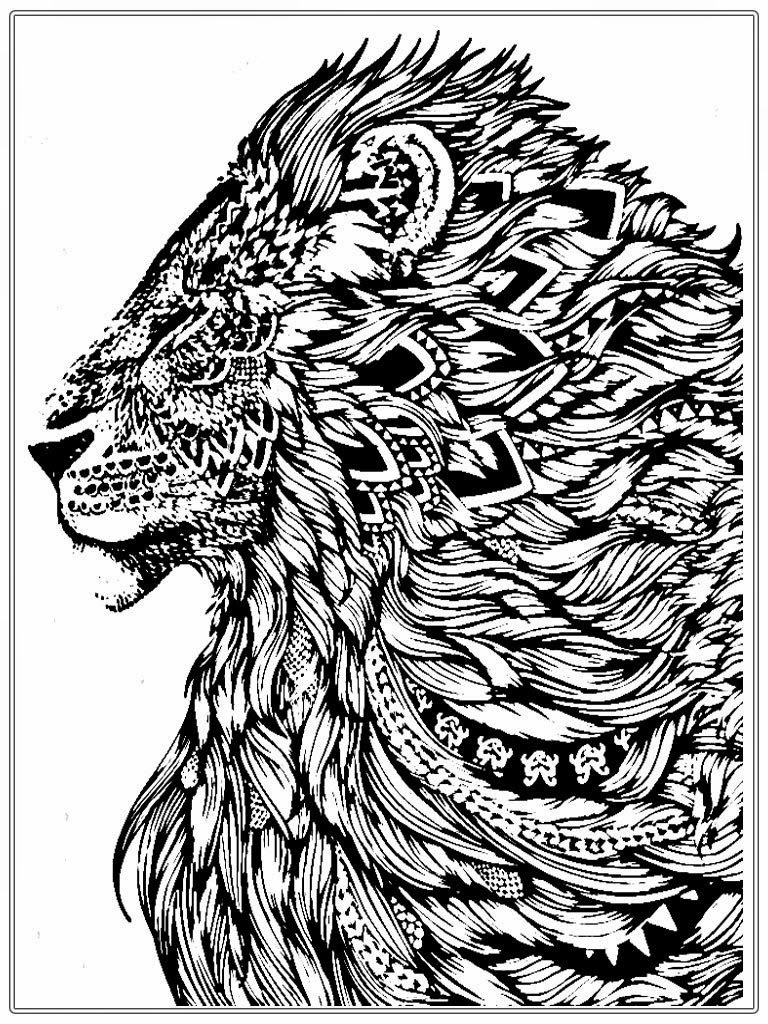 Realistic Lion Adult Coloring Pages Free Realistic