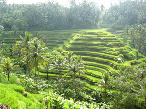 Things to do in bali 9b