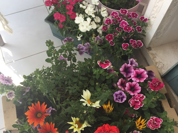 Bahar geldi çiçeklendik...