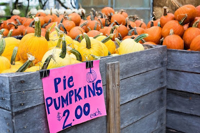 Bin of Pie Pumpkins Marked by the Produce Manager