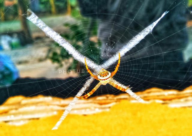 Spider in wave spider in net