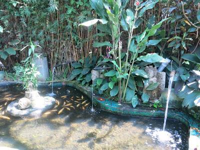 garden, Bali