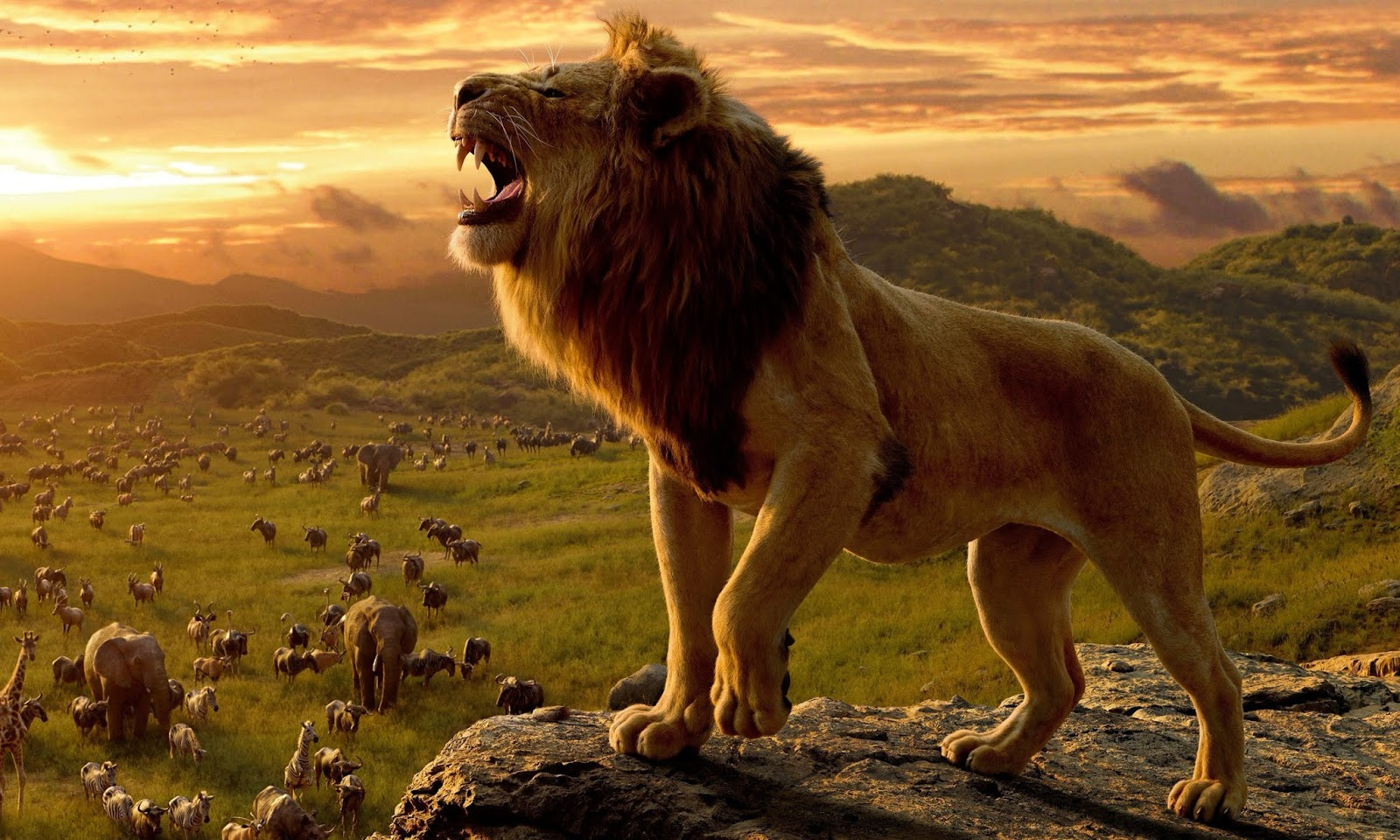 Lion King Songs and Wallpapers 2019