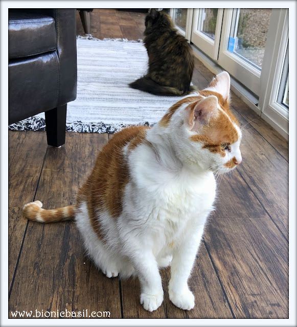 Feline Fiction on Fridays #128 ©BionicBasil® Amber and Pandora
