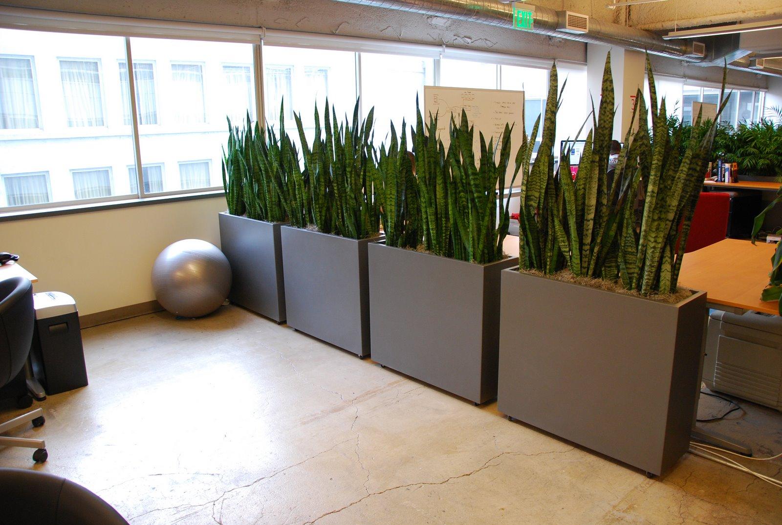 Indoor Desk Plants