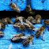 «Επιβεβαιώνονται» οι φόβοι για ευρείας χρήσης εντομοκτόνα