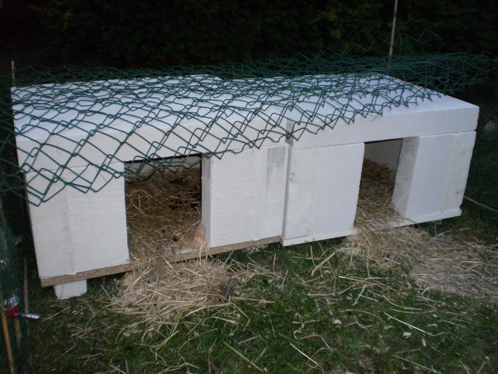mes cochons d 39 inde d 39 amour enclos de septembre 2010. Black Bedroom Furniture Sets. Home Design Ideas