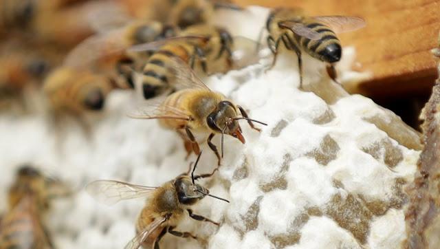 Πωλείται μέλι ανθέων με θυμάρι στην Άρτα