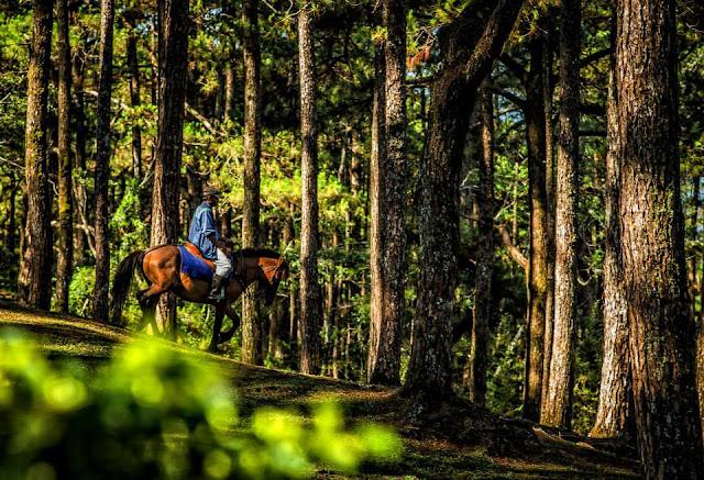 Equine Baguio City
