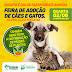 Feira de Adoção de cães e gatos de Serrinha acontece nesta quarta (2)