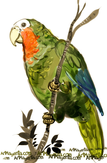 Cuban Amazon sketch painting. Bird art drawing by illustrator Artmagenta