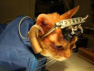 deney hayvanları