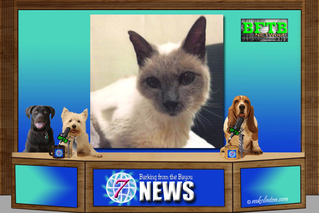 BFTB NETWoof News with 30-year-old cat on back screen