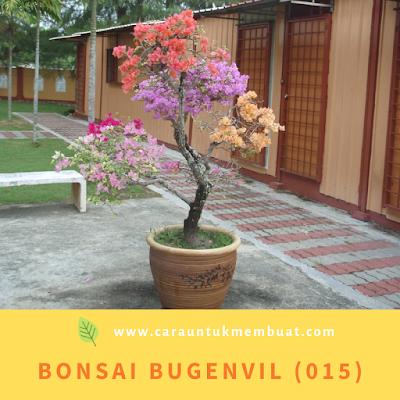 Bonsai Bugenvil (015)
