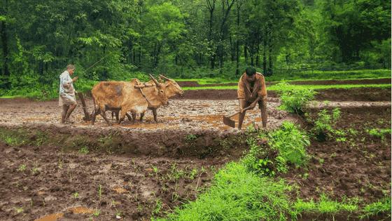 Essay on Farmer in english