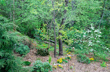 Steps to create a native woodland garden