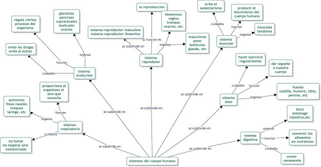 Mapa conceptual sistemas del cuerpo humano